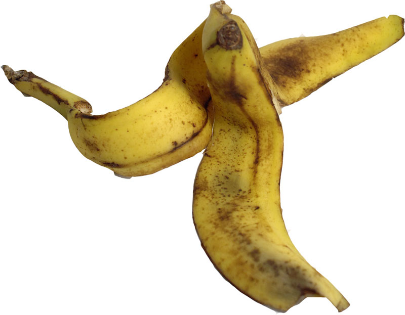 banana peel This s–t is bananas a japanese agricultural research company has developed a  banana with an edible peel called the mongee.