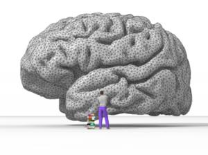 375px-brain