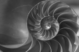 spiral-shell2