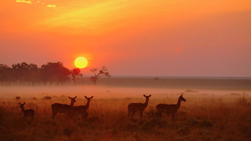 impala-herd-at-dawn-masai-mara-national-reserve-kenya